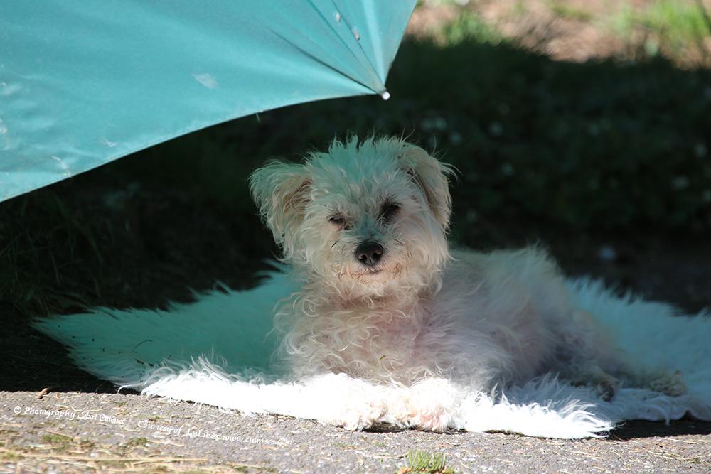 Little Princess LuLu loves sunshine but better with sunshade