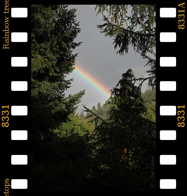 Rainbow treetops no.8331