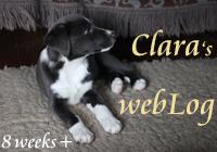 Clara - webLog 8 weeks