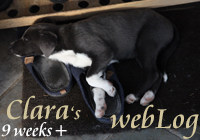 Clara - webLog 9 weeks