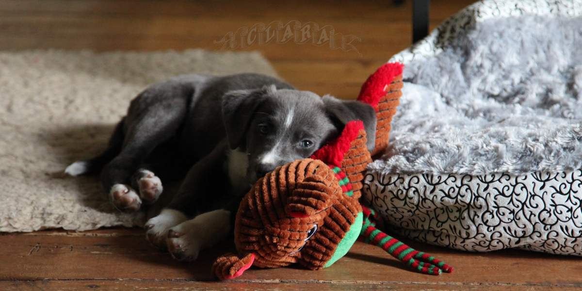 Clara ... empathic with puppet, 8 weeks 6 days