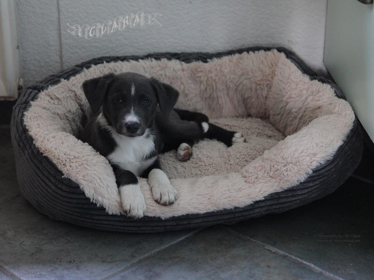 Clara, 9 weeks