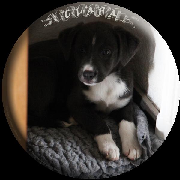 Clara, 8 weeks