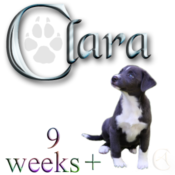 Clara, 9 weeks plus ...