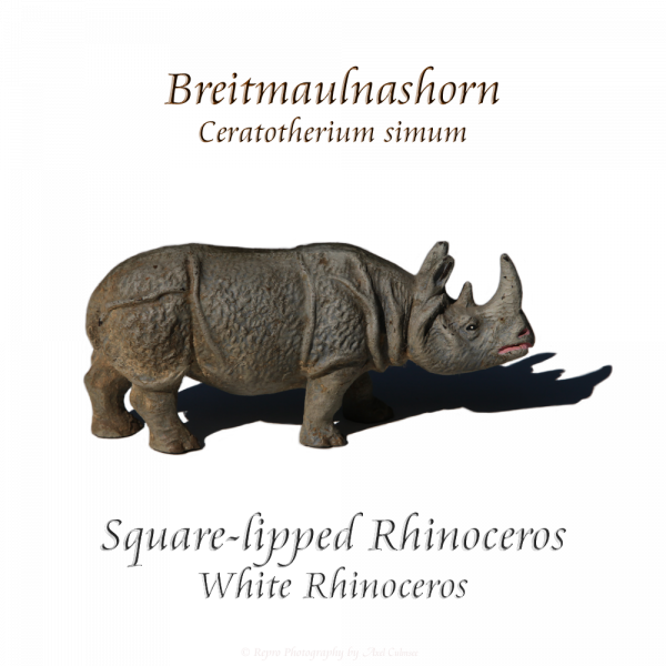 Breitmaulnashorn / square-lipped Rhinoceros (Massefigur, Elastolin)