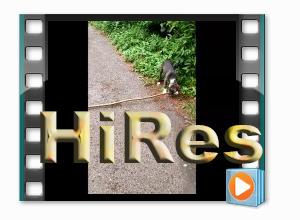 Clara's 1st shepherd's crook, mp4 HiRes