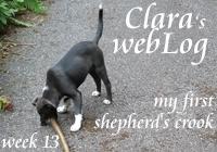 Clara, week 13 - shepherd's crook
