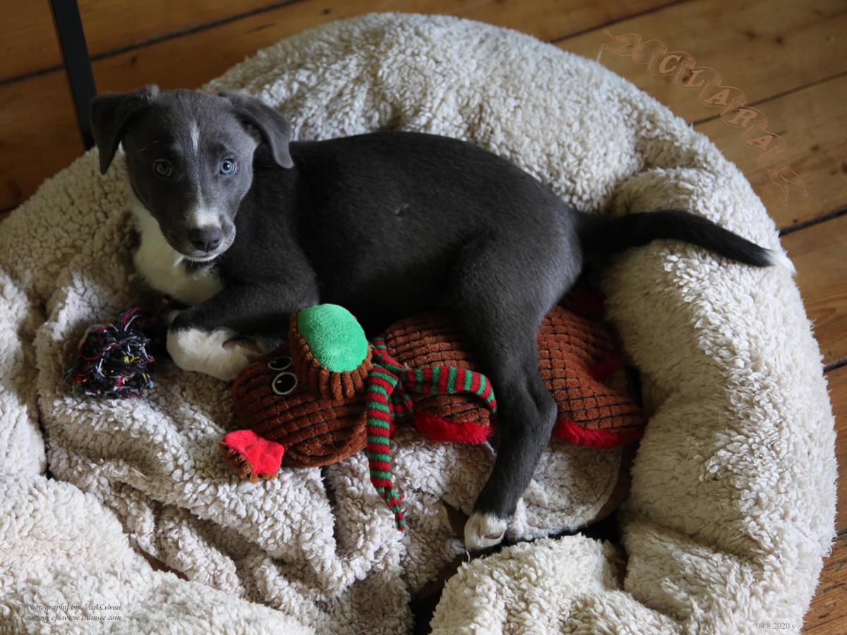 puppy Clara with her puppet