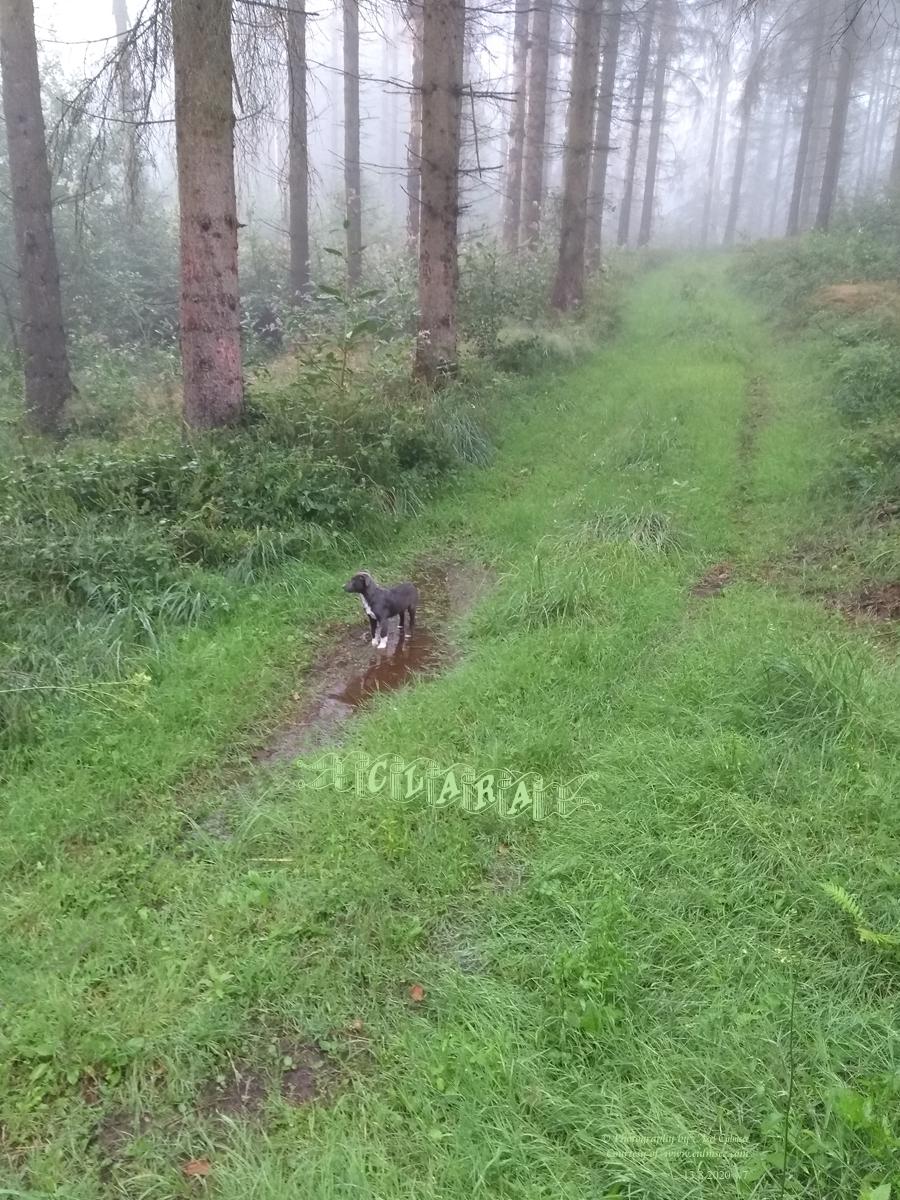 Clara, 11 weeks, woodlands walk