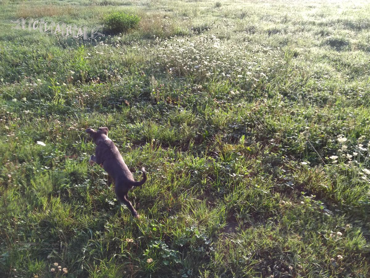 Clara, 11 weeks, meadow (Wiese)