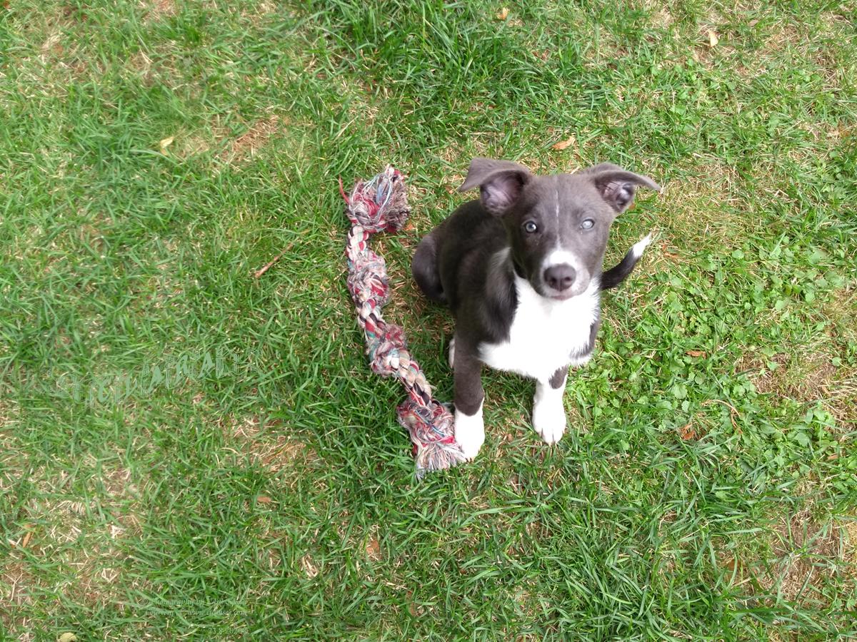Clara, 12 weeks