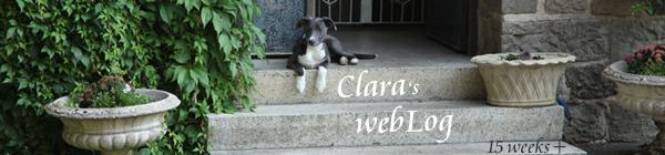Clara, week 15