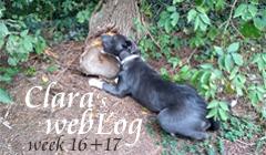 Clara, week 16, 17