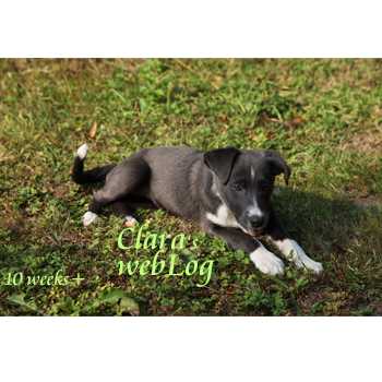 Clara, week 10 plus