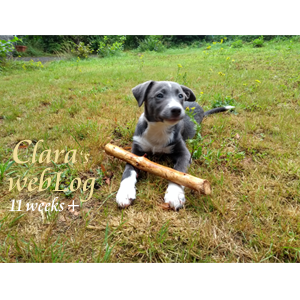 Clara, week 11 plus