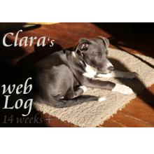 Clara, week 14 plus