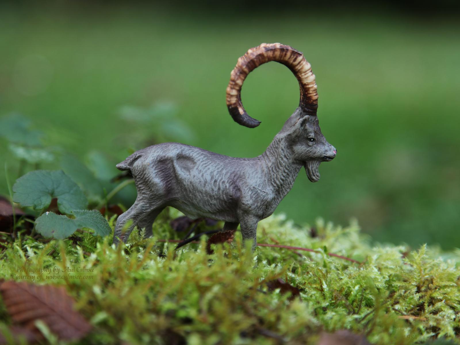 Alpensteinbock / Alpine ibex/ Bouquetin des Alpes (Massefigur, Elastolin)