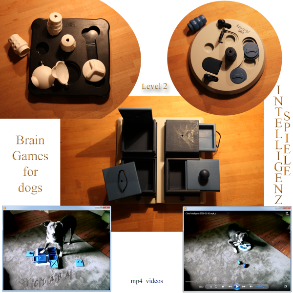 Brain Games for dogs (Intelligenz-Spiele) with Clara