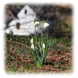 Spring snowflake with Snowdrop