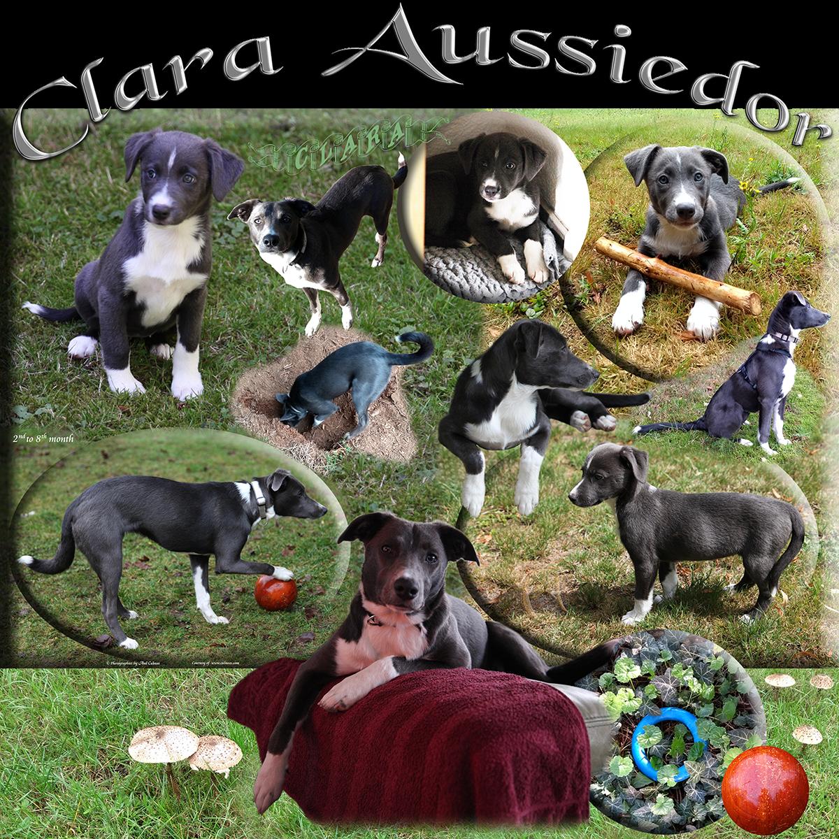 Clara Aussiedor decet July 2020 - February 2021
