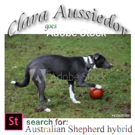 Clara Aussiedor goes Adobe Stock