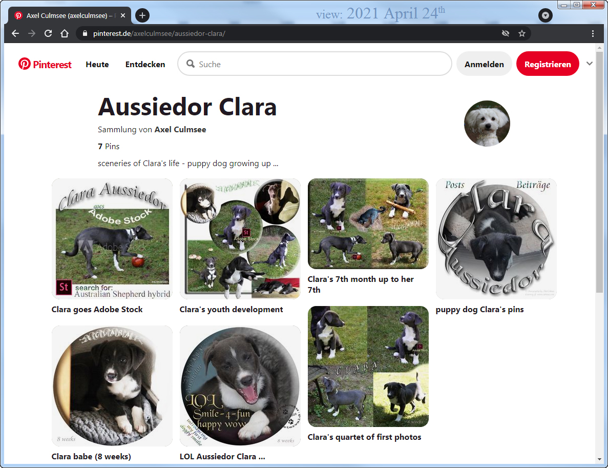 Aussiedor Clara at pinterest