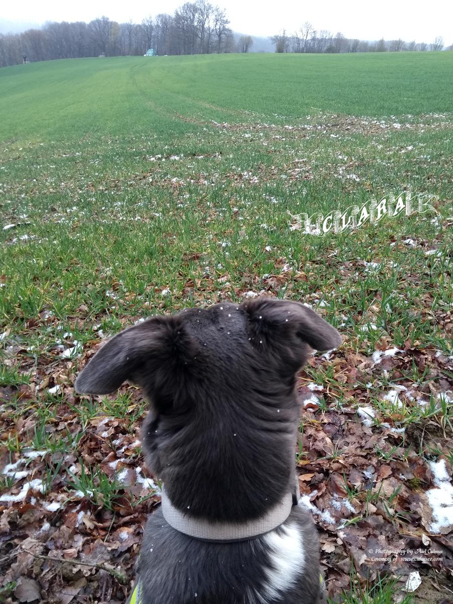 Clara 10 months - in the distance