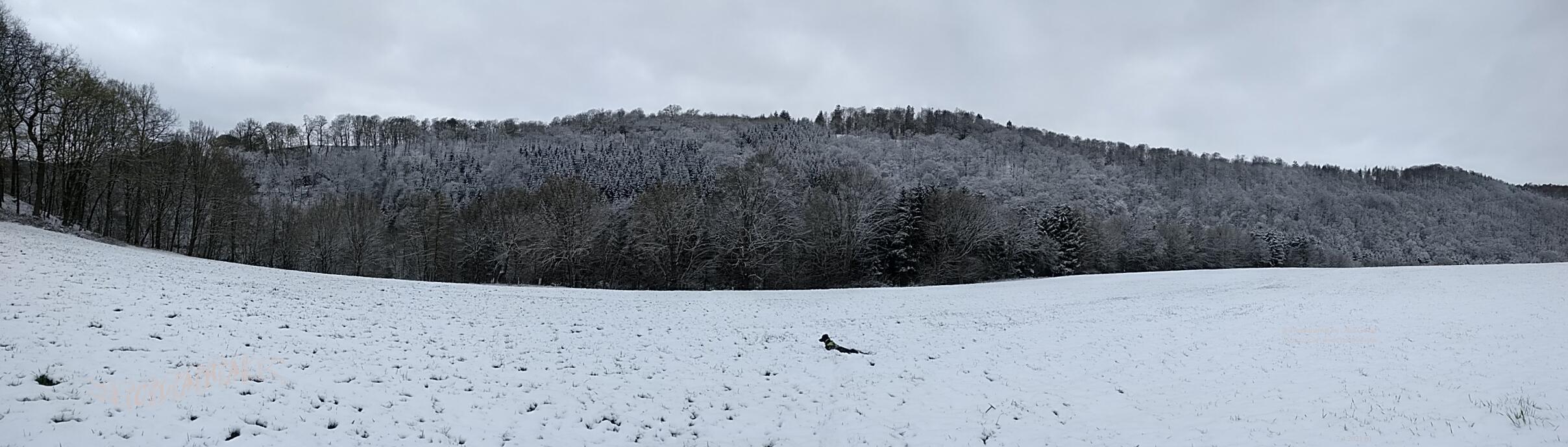 Schnee im April - Clara 10 months