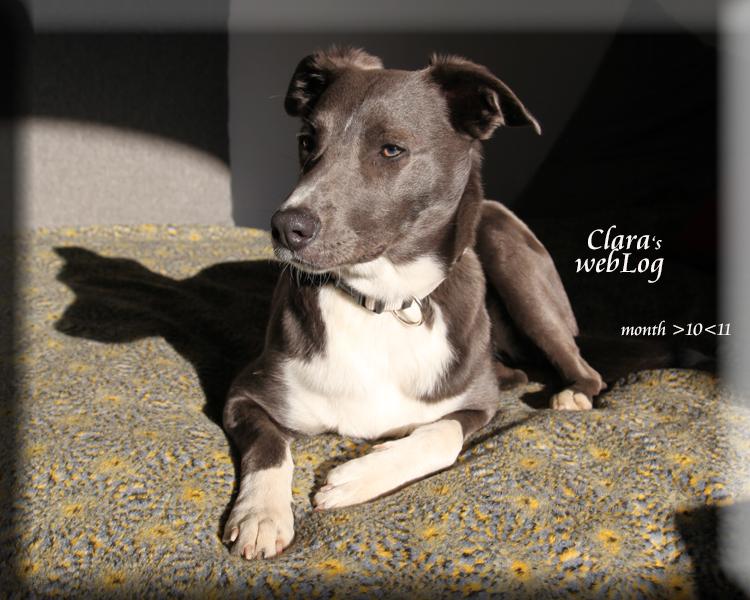 Clara month 10-11