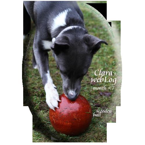 Clara, 7 month, wood ball