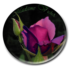 Rose Madame Violet, edited no_0671