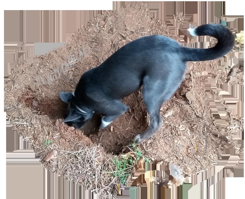 digging Clara, 5 months