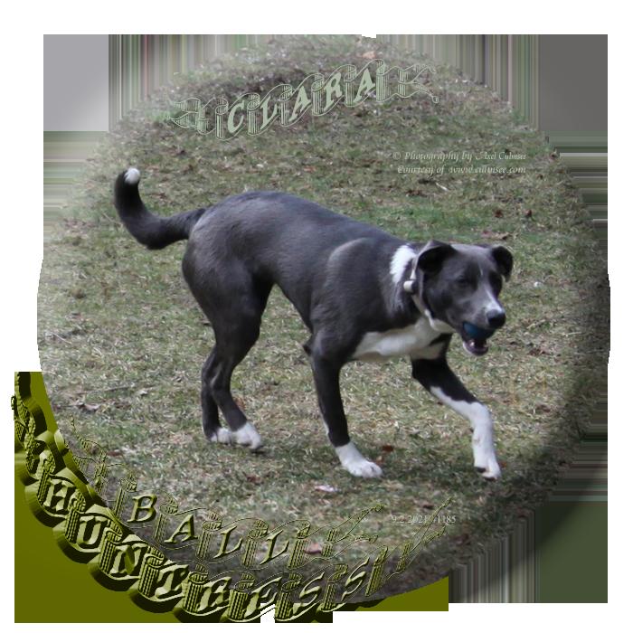 Clara, ball huntress (8 months)