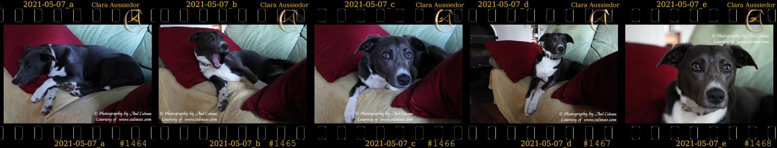 Clara slides no.1464-1468 - 11 months