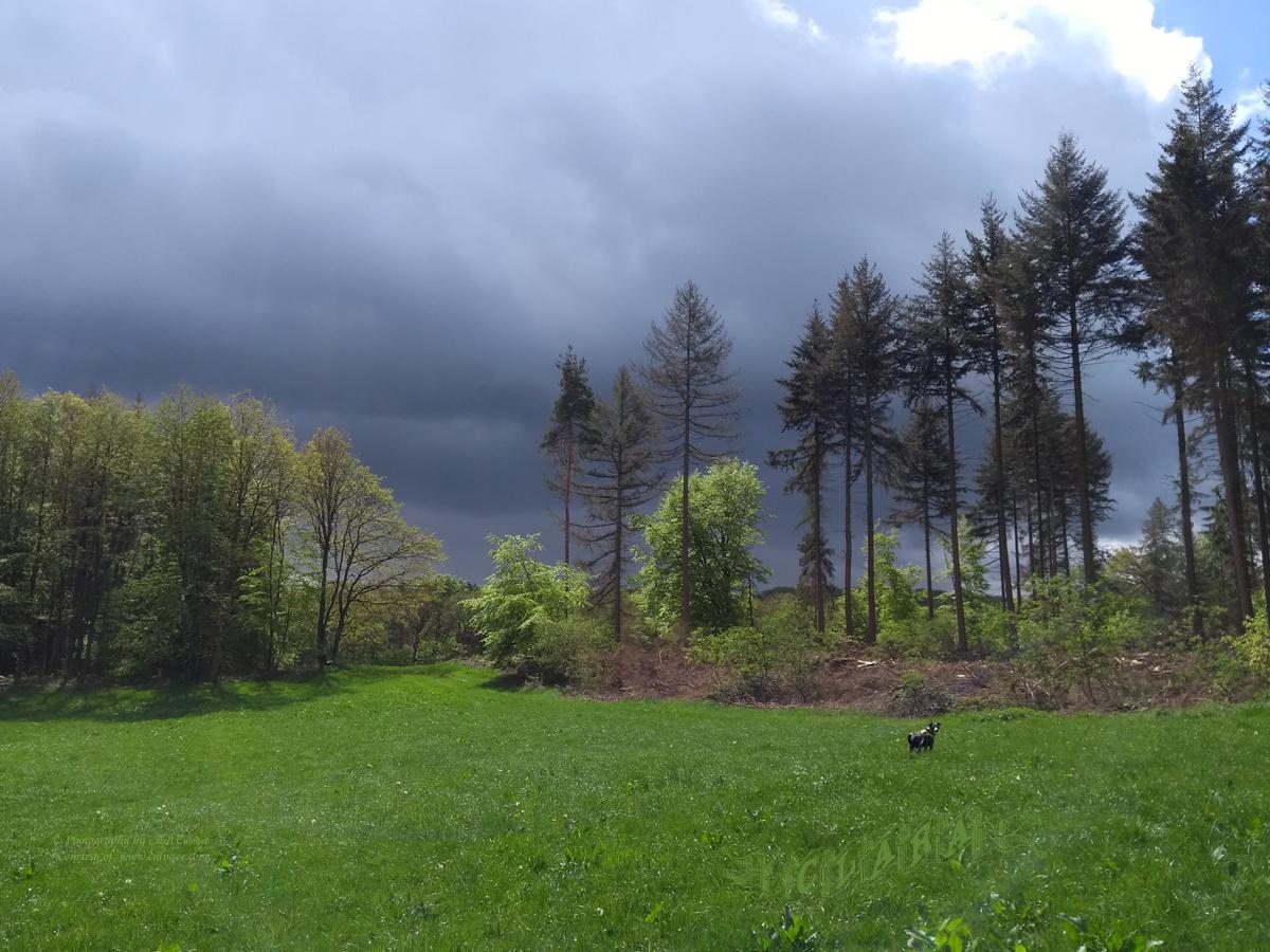 thunderstorm ahead - Clara wonders
