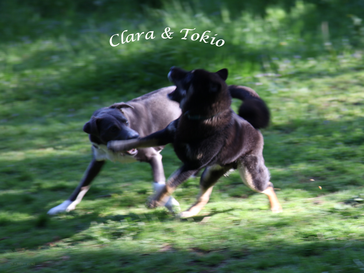 Clara with Tokio at pleasure ground