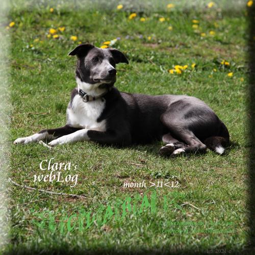 Clara month 11-12