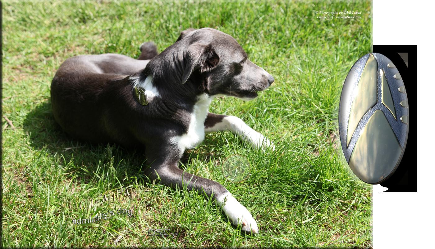 Clara, 1 year, admiralty dog - DSC 3rd season