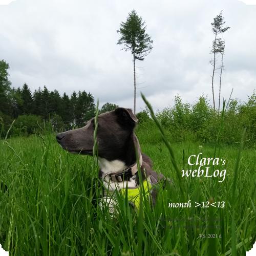 Clara month 12-13