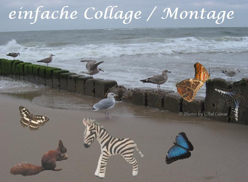 Montage mit Möwen am Strand - Collage