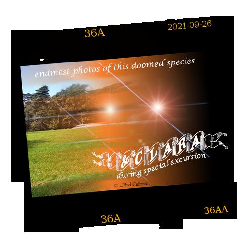 TreeEater Caterpillar - destroyed final slide