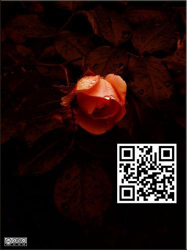 Rosa 692 big Art mit QR-Code