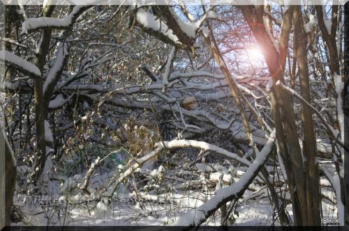 Winter-Szene Blendeneffekt 1