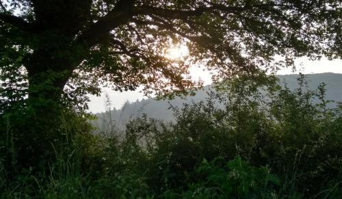 nebel-westerwald 2017-05-29 l
