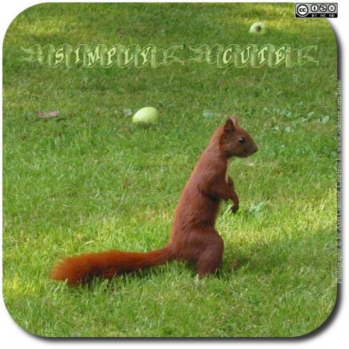 squirrel-926-txt