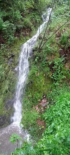 westerwald-wied 2017-05-19 falls-ii